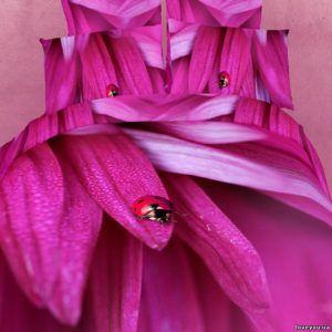 Постельное белье Love you Сатин 3D лепестки new 200x220 (m008420) Сиреневый